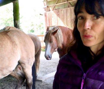Montaro – Horse BodyTalk Session #2