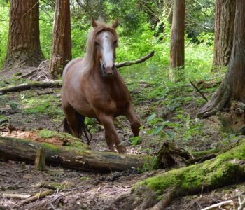 Horses Make The Best Forest Trails!