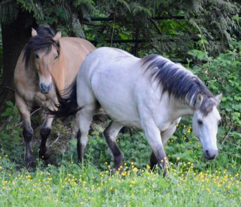 The Simplest Way to Increase Connection with your Horse