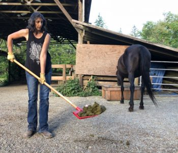 Stud Piles – Teaching Horses WHERE You Want Them to Poo