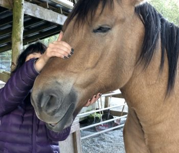 Try some Cranial Massage for your Horse
