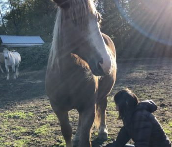 The Divine Mother – Love Bath from my Horse