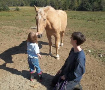 Rehab Tools for the Senior, Distressed or Dissociated Horse