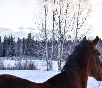 Winter Blessings From the Northern Herd