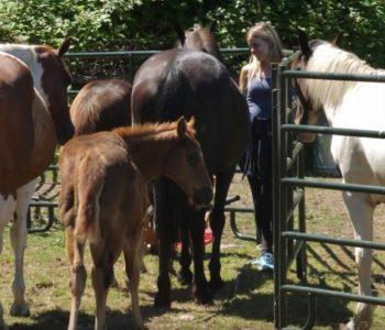 Herd Guardian Montaro Initiates a Human Into the Herd
