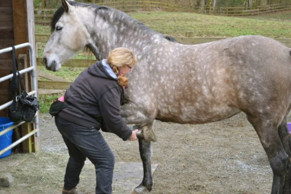 Equine Chiropractor & Bodyworker – How to Find a Good One