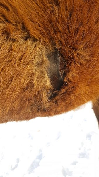 Listening to the Wound: 3 Horses Heal Without Intervention