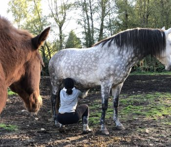 What Makes Your Horses So Different?