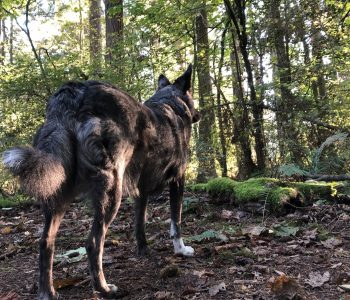 Horses, Dogs, Forest and Ice