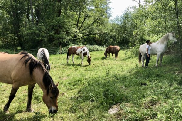 Spontaneous Animal Communication Session with the Herd
