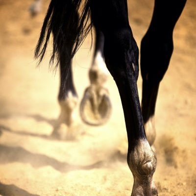 Natural Wild Oregano Thrush Remedy for Horses Hooves