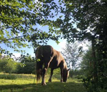 REAL Communication – Unhaltered Horses & Unfenced Land
