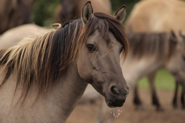 Equine Genome Project Gives Modern Breeders a Big Fat FAIL