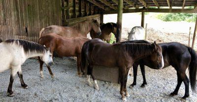 horse-herd-meditating