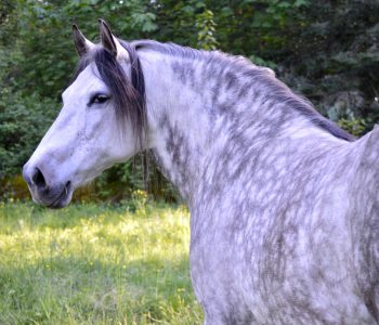 How To Choose a New Horse That Will Get Along with Others