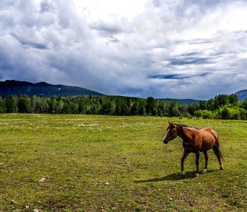 Regenerating Stressed Pasture