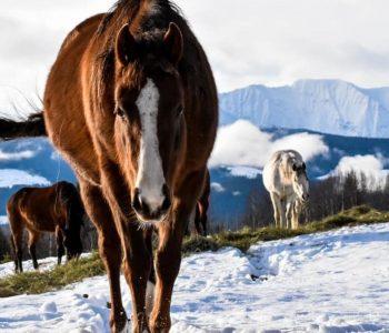I Can't Care for my Horse – I'm In Waaay Over My Head!