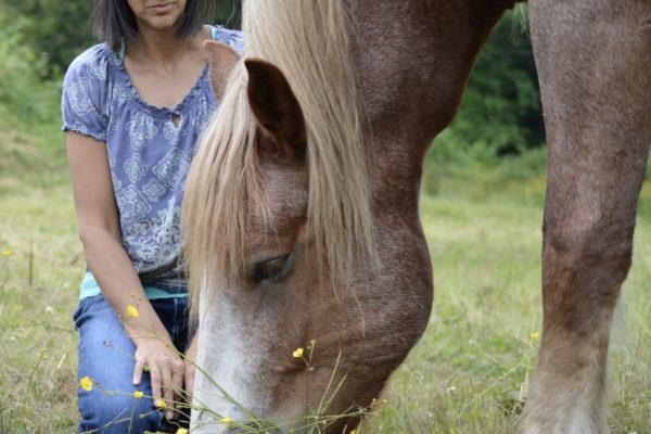 DMSO-Based Hoof Abscess Remedy
