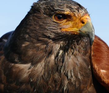 Hawk-Assisted Therapy? Yep, it's Pretty Cool!