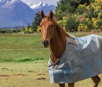 Blankets, Fly Masks and Shelters – What Does your Horse Think?