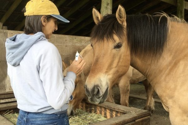 Natural Method to Electrocute and Get Rid of Horse Lice!