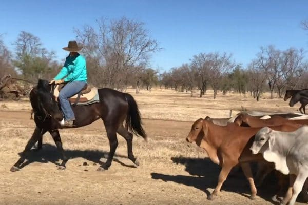 Working Horses, Working Cattle – An Insider's Ethos