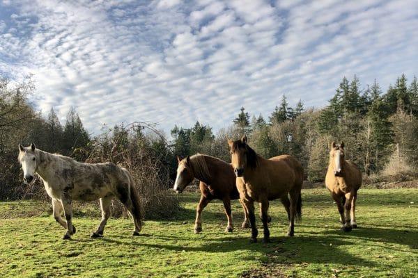 Family Dynamics & Problem Horses