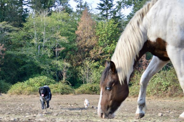 Dogs and Horses – Safety, Control and Mirroring