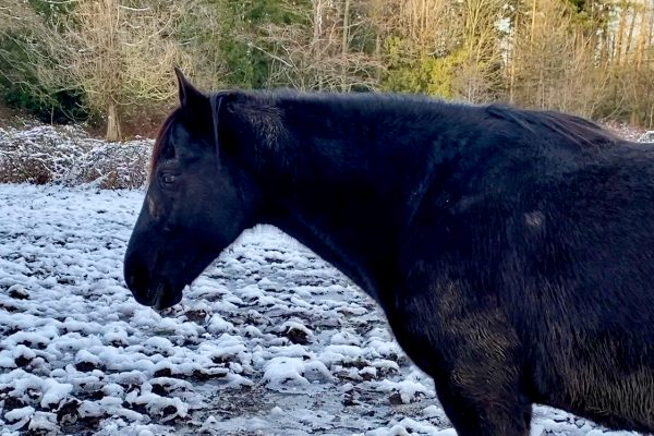Christmas & New Year 2021 Message from Singing Horse Herd