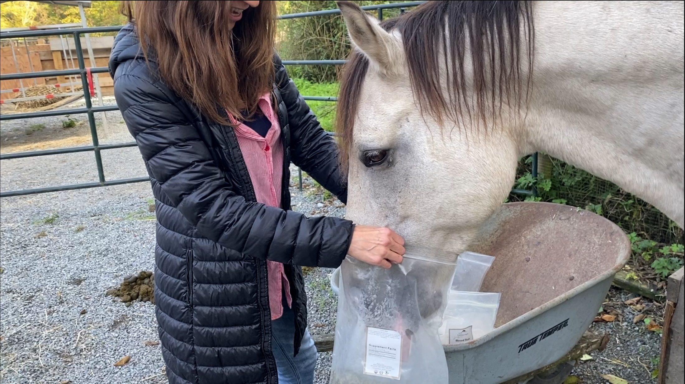 Horse Self-Selects Herbs to Help with Metabolism & Weight Regulation – Part 1