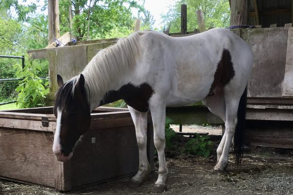 I Feel Guilty – My Vet Injured/Killed my Horse