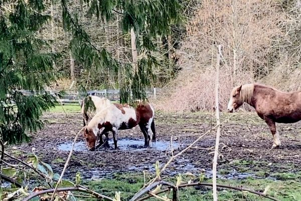 Of Mud, Horses, Soil & Birds