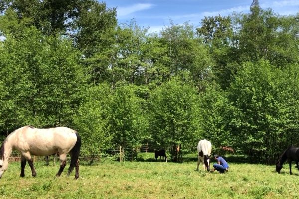 Exploring with a Wild Mustang – No Training No Touching