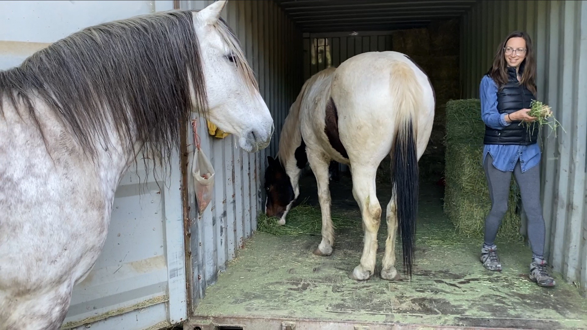 Seacans, Trailers & Horseplay