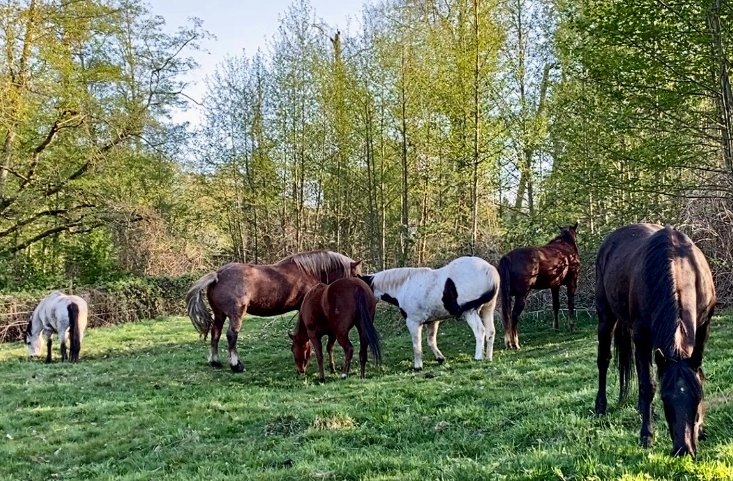Summer Frolic with The Singing Horse Herd